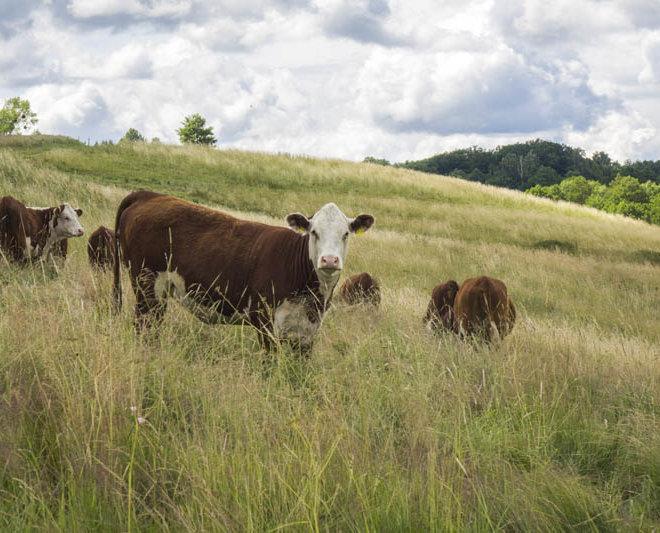 Systemy utrzymania bydła