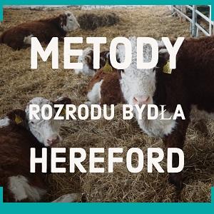 Metody rozrodu bydła hereford