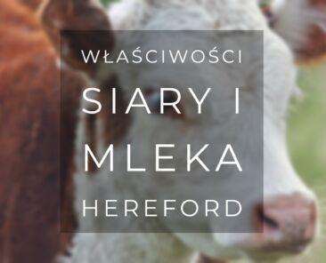 Właściwości siary i mleka hereford